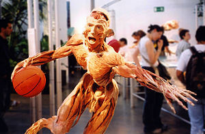 English: Body Worlds anatomy exibition. Exibit...