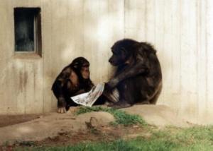 Umarmungen besänftigen auch unter Schimpansen die Opfer von Angriffen (Foto: pixelio.de, W. Kölling)