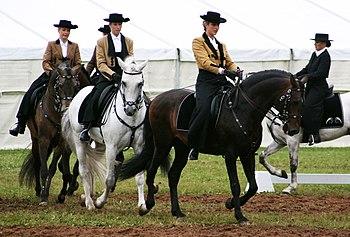 Deutsch: Pferde mit Reiterinnen. Pferderasse L...